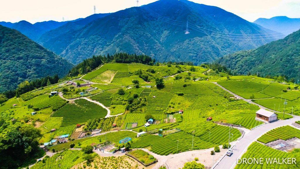 岐阜県の天空の茶畑をドローン空撮