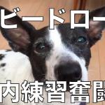 【ホビードローンの練習奮闘記】ドローンを飛ばすのって意外と簡単!?