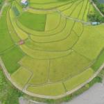 和歌山ドローン空撮inあらぎ島|孤島のような棚田の形状が面白い