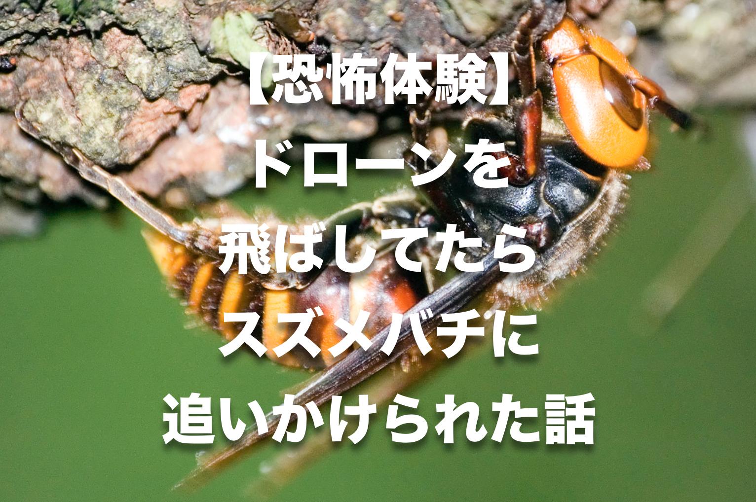 【恐怖体験】ドローンを飛ばしてたら雀蜂に追いかけられた話