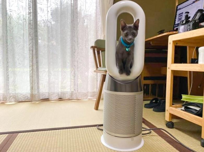 ダイソンの空気清浄機