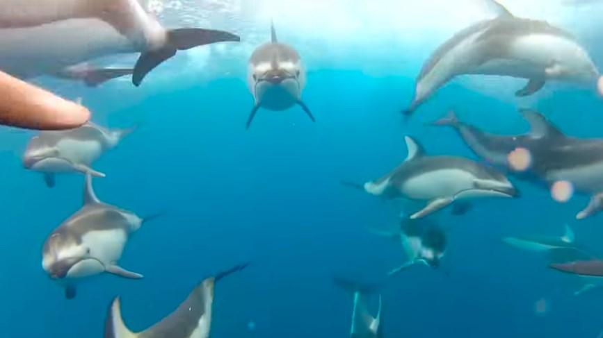水上ドローン『パワードルフィン』で釣りや救助も可能に【PowerDolphin】
