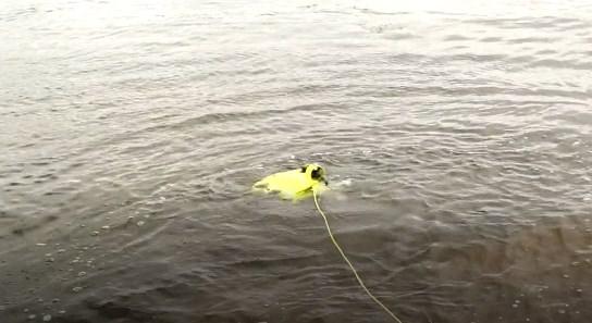 【操作性ベスト1】水中ドローン『FIFISH|ファイフィッシュ』の使い方
