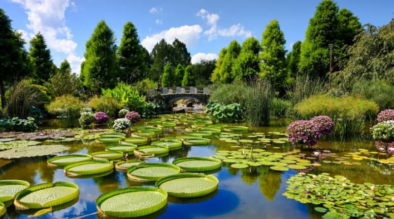 【RF24-70mm】水生植物公園みずの森